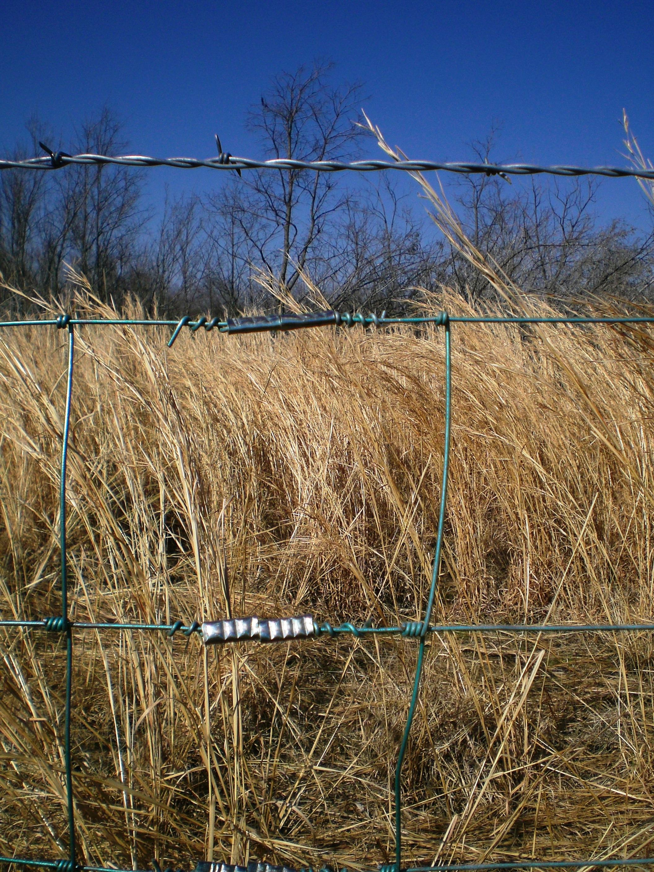 Photo Friday Barbed Wire Fences Beef Runner